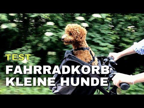 Fahrradkorb für Hunde - Fahrradtour mit Zwergpudel Moki - Anleitung & Mokis erste Fahrradminuten