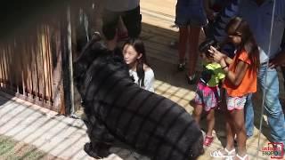 Новоселье гималайских медведей, зоопарк Алматы