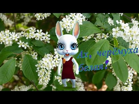 Zoobe Зайка Белая черемуха