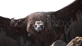 Biggest Birds In The World Even Bigger Than Elephants : Full Documentary