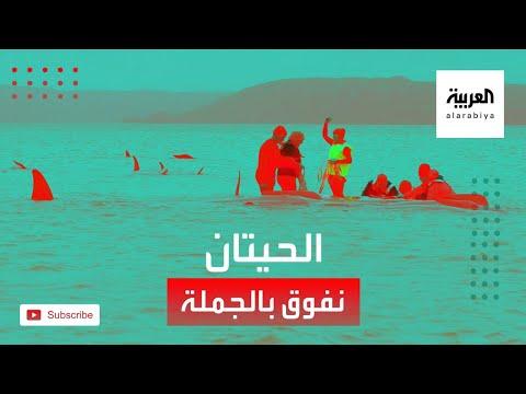 العرب اليوم - شاهد: لقطات مأساوية قبالة جزيرة تسمانيا الأسترالية!