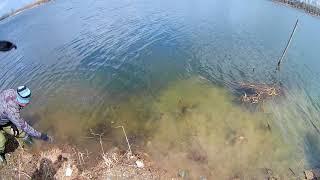 Браконьеры бьют сетями рыбу в нерест г. Новосибирск.
