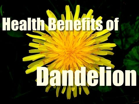 Video HEALTH BENEFITS OF DANDELION