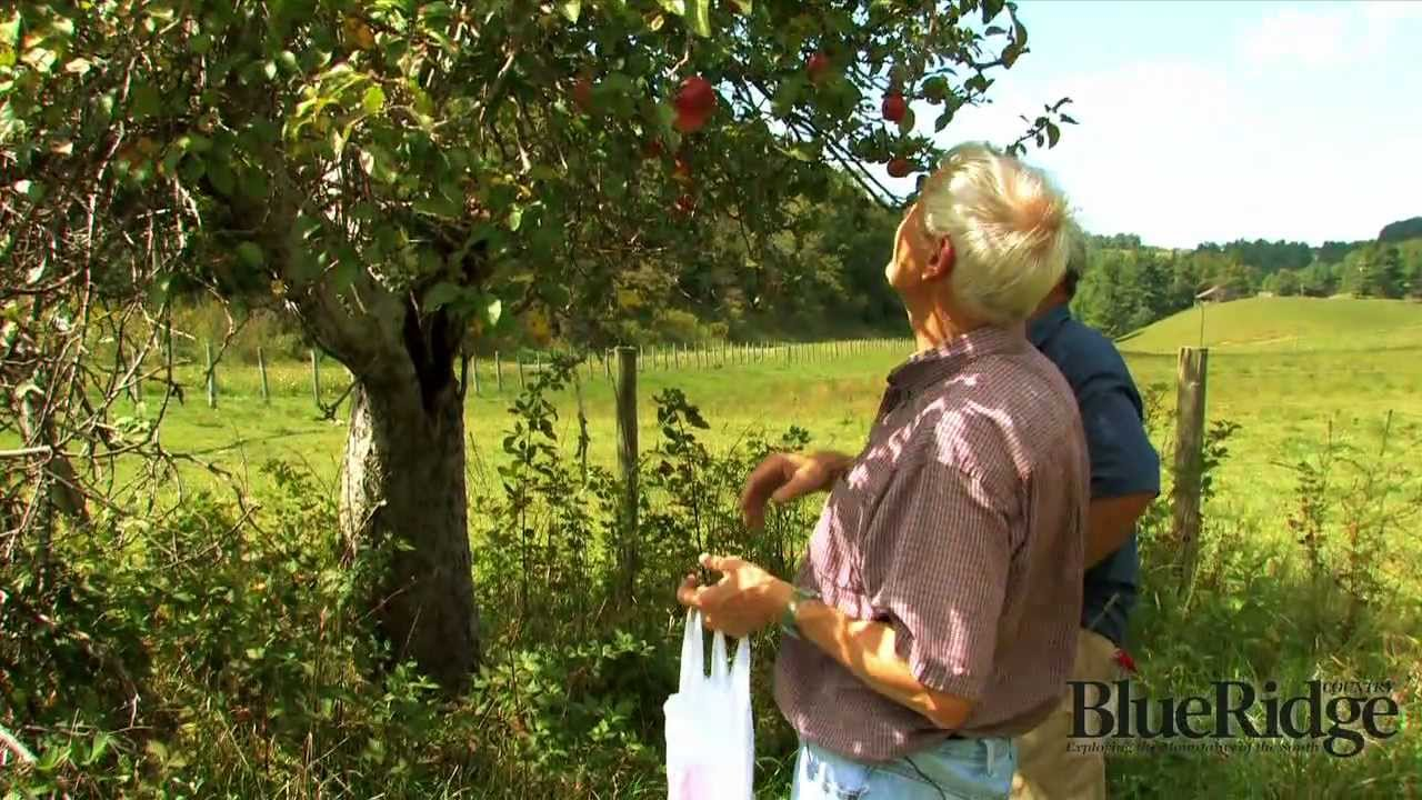 The Apple Hunter