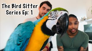 Training Our Bird Sitter & Leaving Mikey And Mia || The Bird Sitter Series - Ep: 1