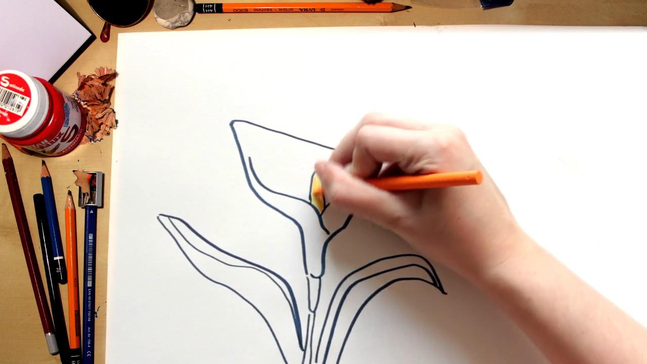 Como dibujar una flor Lirio (comentado)