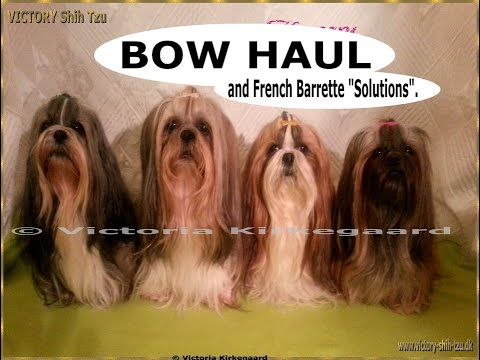 VICTORY Shih Tzu, BOW HAUL And French Barrette Solutions.