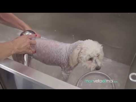 Lalimentation de lenfant avec atopitcheskim par la dermatite