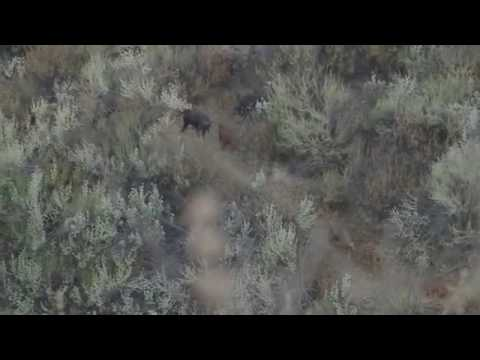 Oak stone outfitters pig hunt promo video