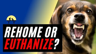 When to Put A Dog Down or Rehome for AGGRESSION? (w/ expert Michael Shikashio)