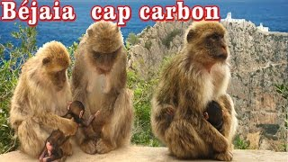 preview picture of video 'Singe au cap carbon Béjaia.'
