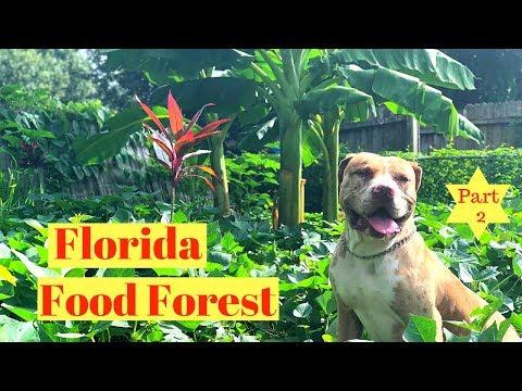 Backyard Food Forest| Permaculture landscape