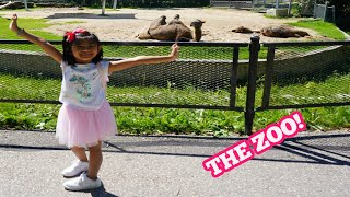 Animals at the ZOO Fun with Sophia with Cute Polar Bear Playing in the water