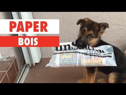 The Dog Really Did Eat My Homework! I Swear!