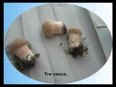 Crema di piede da un fungo e un odore