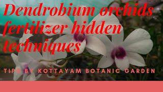 Dendrobium Orchids Fertilizer Hidden Techniques