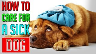 How To Care For A Sick Dog    Dog Facts