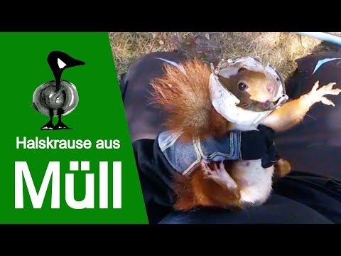 Halskrause aus Müll - Tiernotruf #160