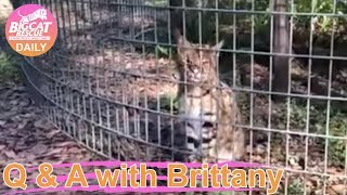 Q&A With Brittany~ Birthday Treats For Birthday Boys- Simba Savannah And Hutch Serval! 1.14.2019