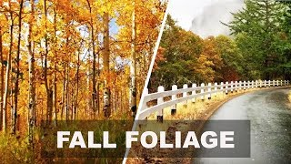 7 Perfect Places to See Fall Foliage thumbnail