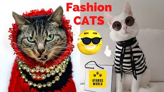 Cute and funny cat videos -Tik Tok #05