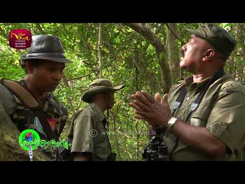 Sobadhara - සොබාධාරා |Season 2 | Episode - 14 | 2018-04-20 | Rupavahini Documentary