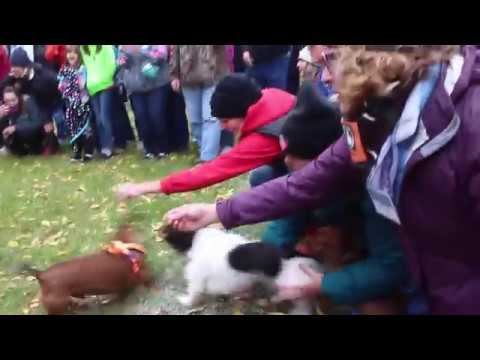 Wiener Dog Race Oktoberfest