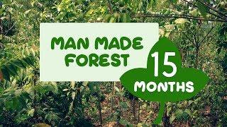 Man Made Forest at Puliyarakonam After Fifteen Months