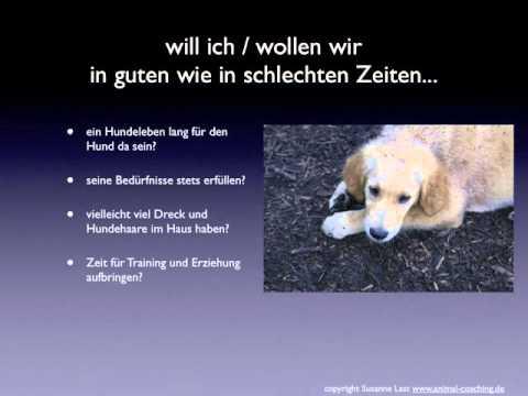 Sachkunde für Hundehalter - Überlegungen vor der Anschaffung eines Hundes