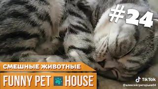 СМЕШНЫЕ ЖИВОТНЫЕ И ПИТОМЦЫ #24 ЯНВАРЬ 2019 [Funny Pet House] Смешные животные