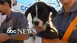 Rescues underway for animals caught in Michael