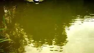 preview picture of video 'Anatec PAC carp fishing bait boat demo exclusive to baitboats.net'