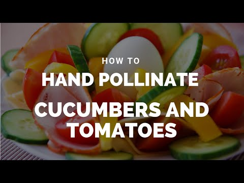 , title : 'How To Hand Pollinate Cucumbers and Tomatoes (View in HD)