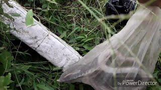 Thăm bẫy rắn bắt được BÌM BỊP, phát hiện MÈO RỪNG?? & bộ 3 #hổhành #hổhèo #hổngựa #KimNguyễn #bẫyrắn
