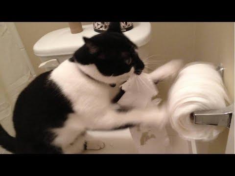 , title : 'Я РЖАЛ ПОЛЧАСА. Смешные Коты и Собаки. ПРИКОЛЫ С ЖИВОТНЫМИ. #25'