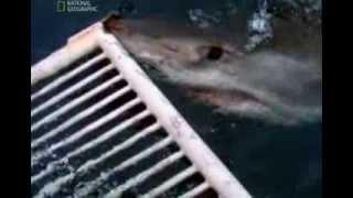 Самые опасные животные. Морские глубины.