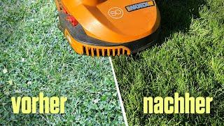Rasen reparieren in 4 Wochen mit Mähroboter, Bewässerung und Chemie – Rasenupdate
