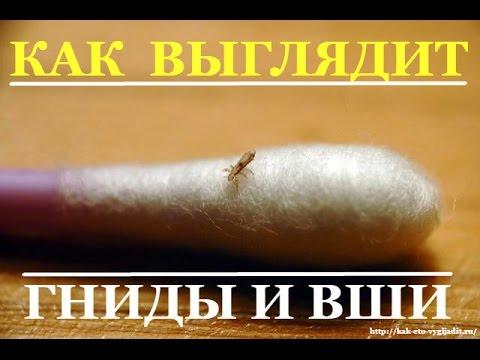 Мед с полынью от паразитов