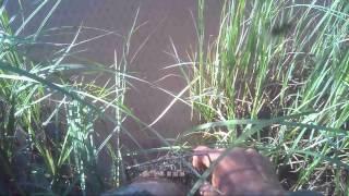 Ловля на удочку с берега летом,видео rybachil.ru.