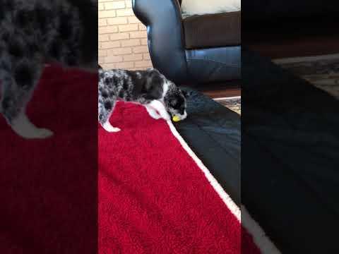 Bianca's Video