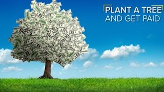 Plant trees & get Paid