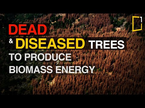 In California, A Push Grows to Turn Dead Trees into Biomass Energy