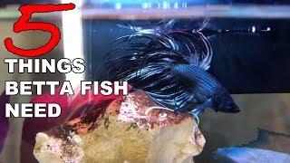 5 Things Betta Fish Need - Betta Care for Beginners