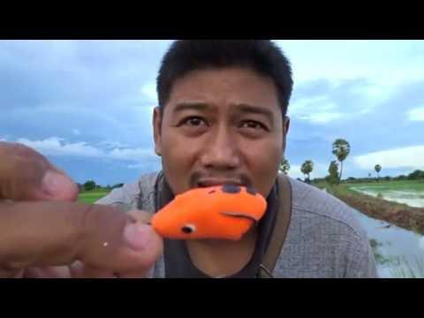 Phlebologist พุชกิน