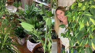 30 Low Maintenance Houseplants I Cant Live Without!