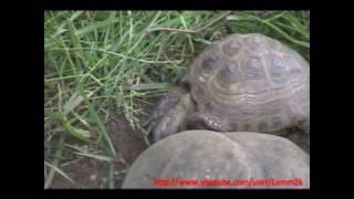 Heavy Metal черепаха