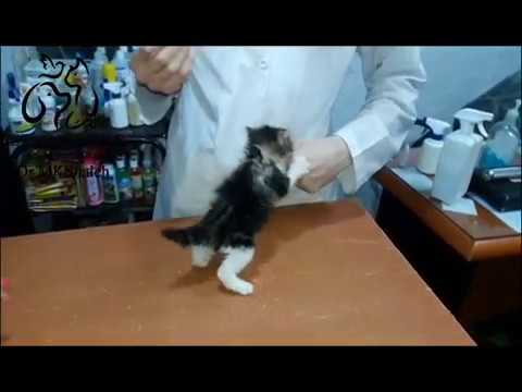Furious little baby cat at the vet clinic