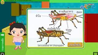 สื่อการเรียนการสอน ระบบย่อยอาหารของมนุษย์และสัตว์ ม.2 วิทยาศาสตร์
