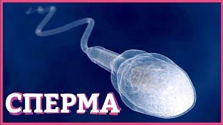 Почему нельзя глотать сперму