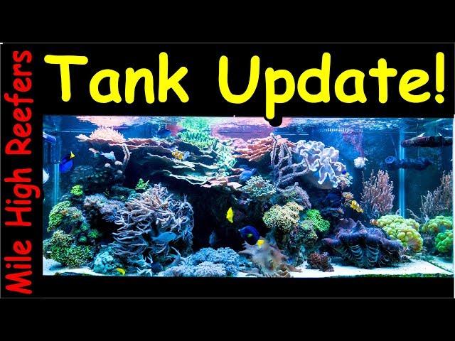 Reef Update: Tangs, New Frag Racks and Water Flow